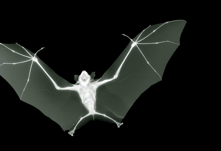 X-ray images by Nick Veasey (2)