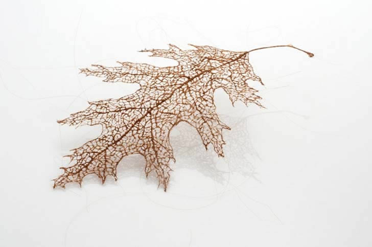 Human hair leaf by Jenine Shereos (3)