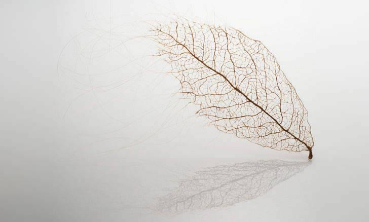 Human hair leaf by Jenine Shereos (2)