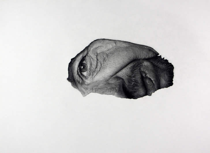 Face to the side. Drawing by Jonny Shaw
