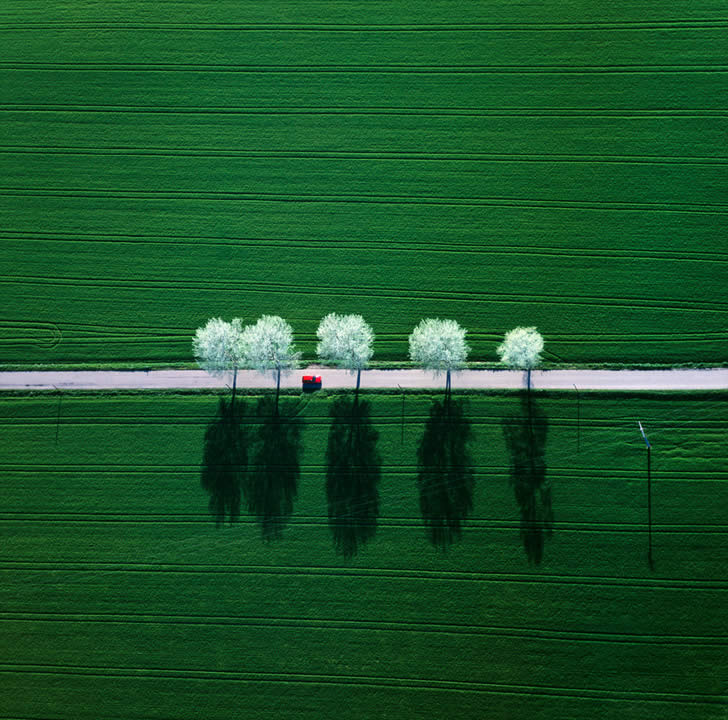 Trees in the Middle of Green by Klaus Leidorf