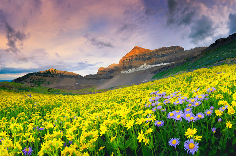 Mountai and Yellow Flowers. Photo by Dan Ransom