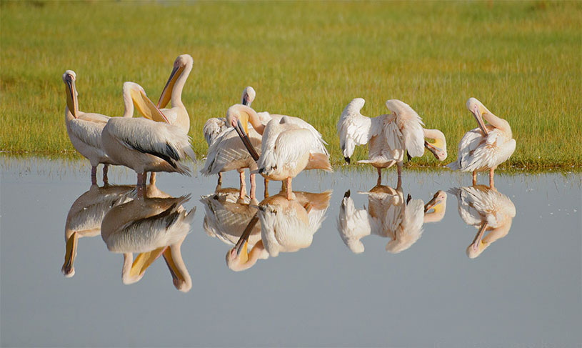Birds reflected in water by Michell Krog