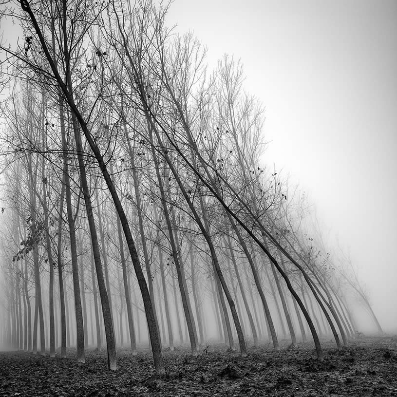 Tree photograph by Pierre Pellegrini 2