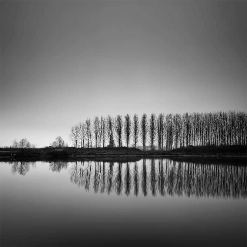 Photograph of trees by  Pierre Pellegrini 7