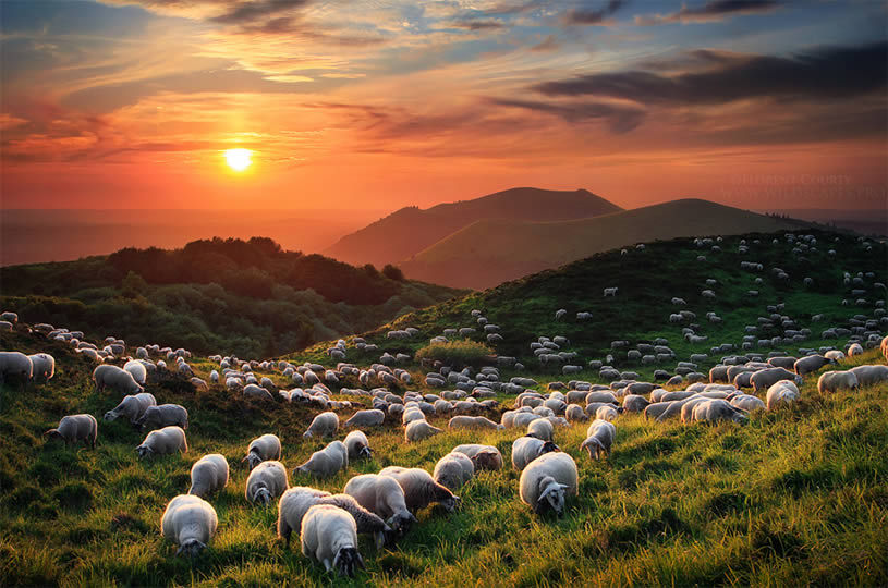 Stunning landscape photo by Florent Courty -sheep and field
