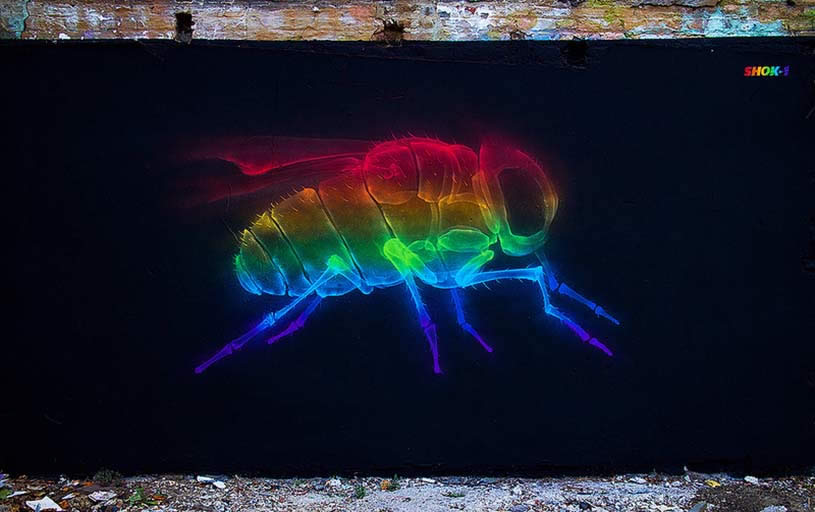 Rainbow x-ray fly by shok-1
