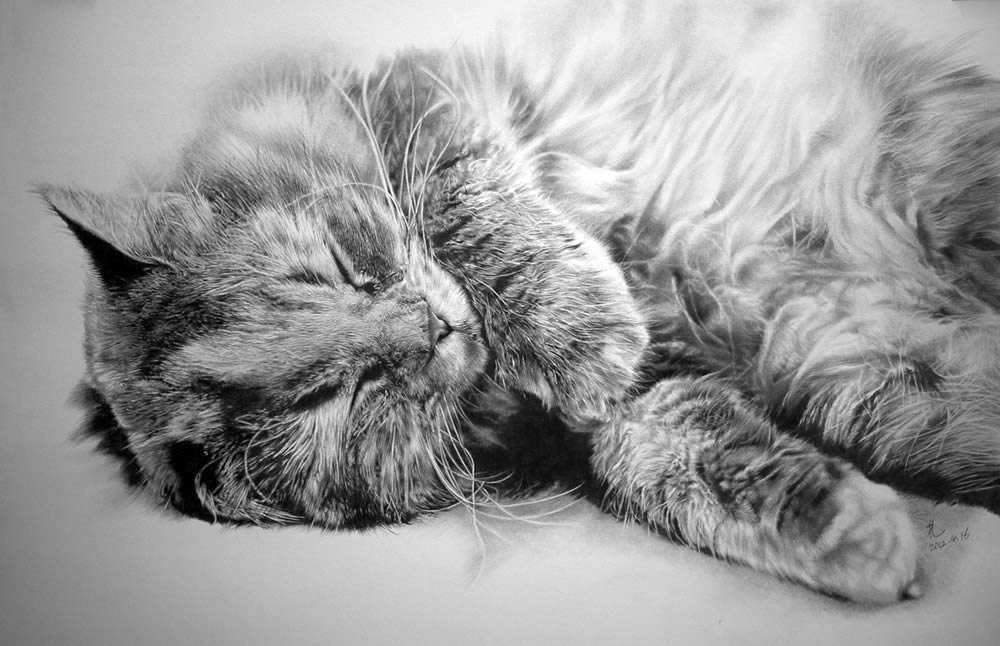 cat lying on back, drawing by paul lung