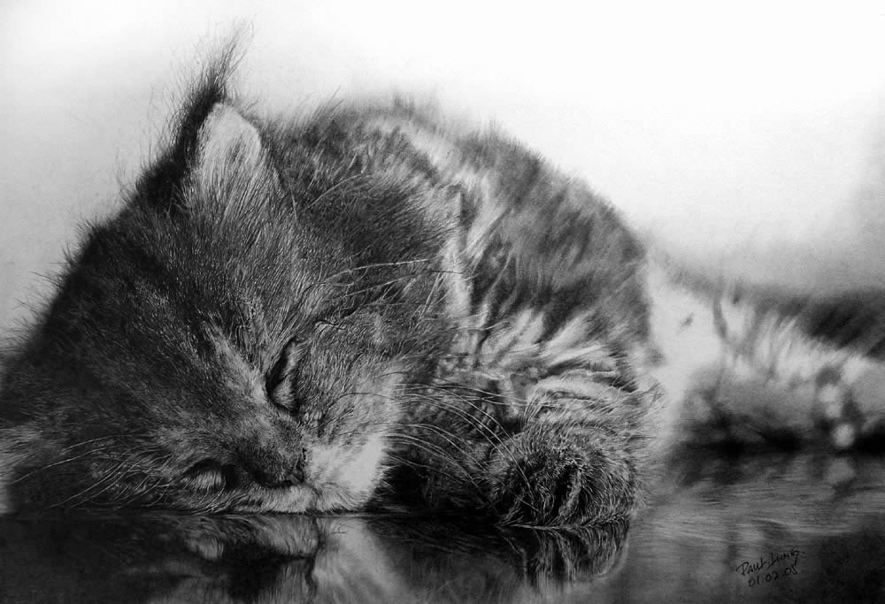 cat sleeping, drawing by paul lung