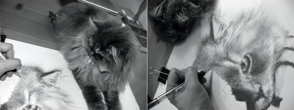 paul lung drawing his cat
