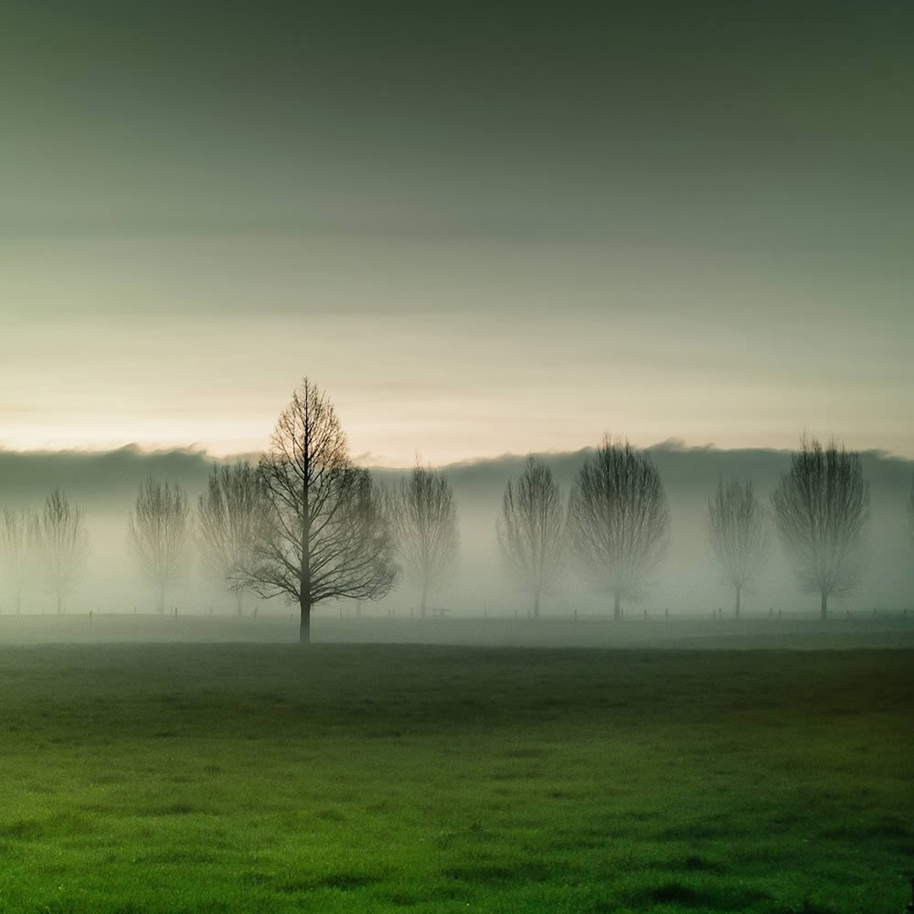 fog and trees by cuba gallery