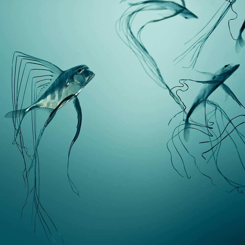 fishes in blue water by cuba gallery