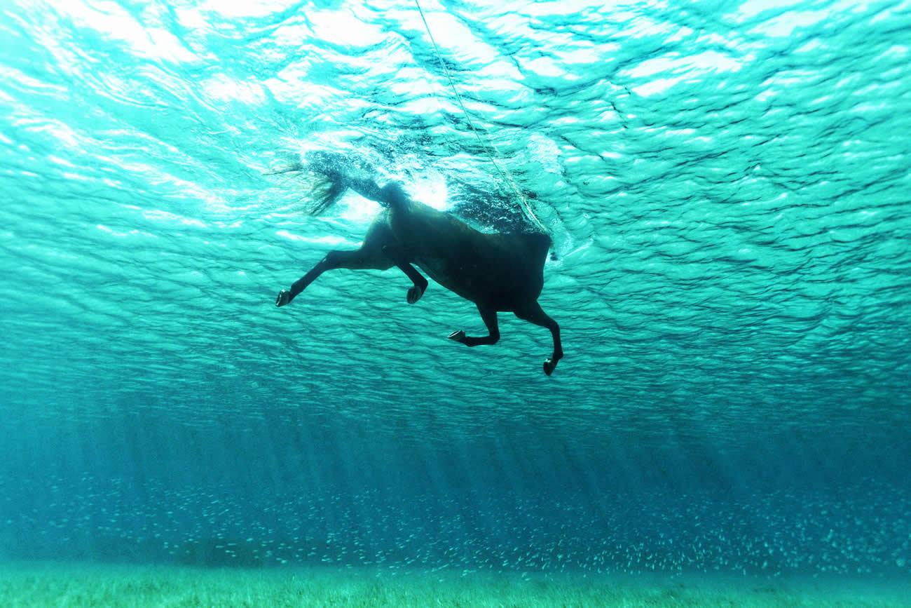 kurt arriago underwater horse