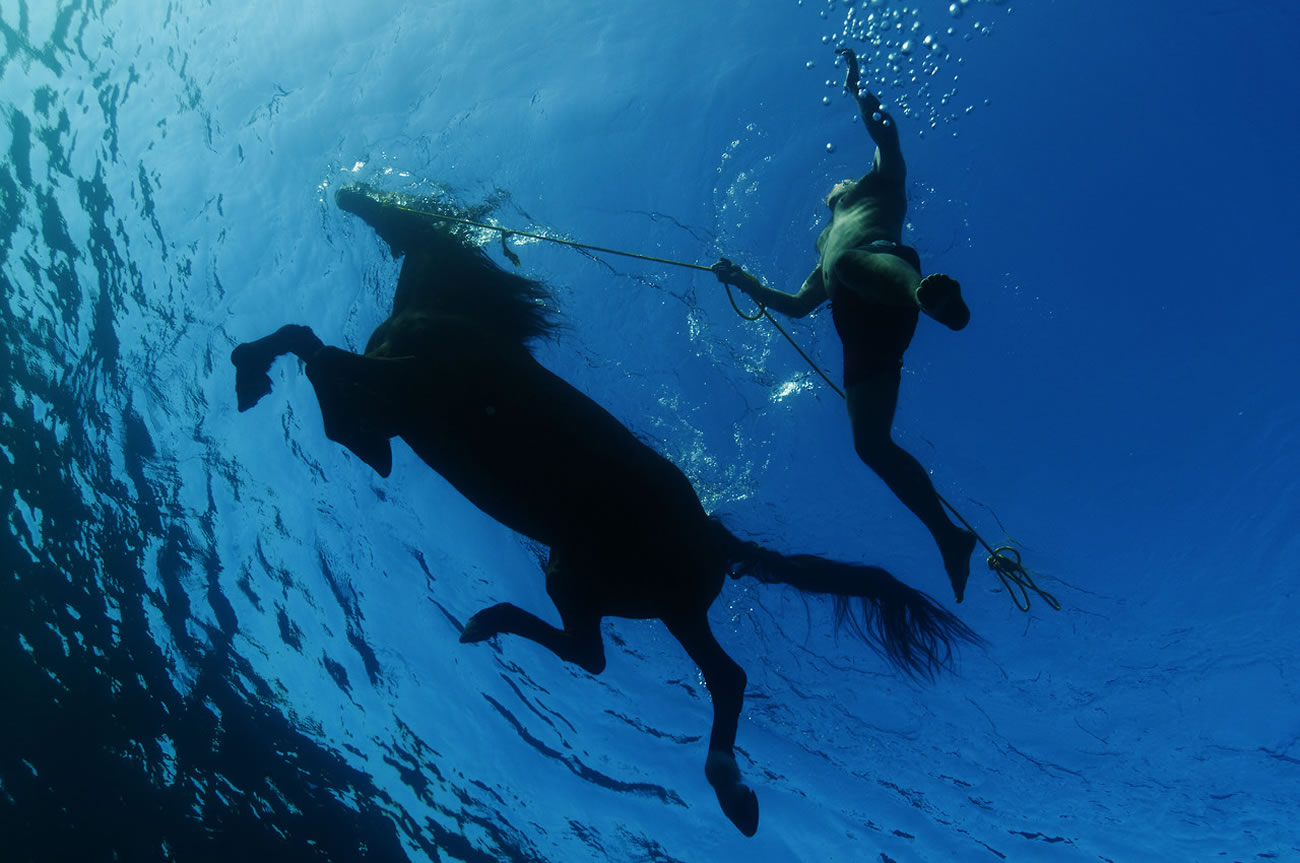 underwater horse kurt arraign