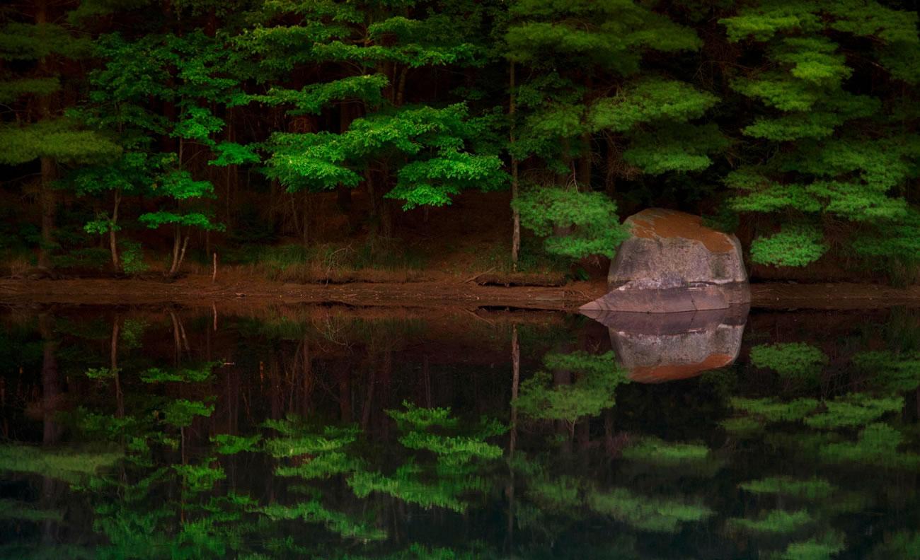 mirror landscape trees robert goulet