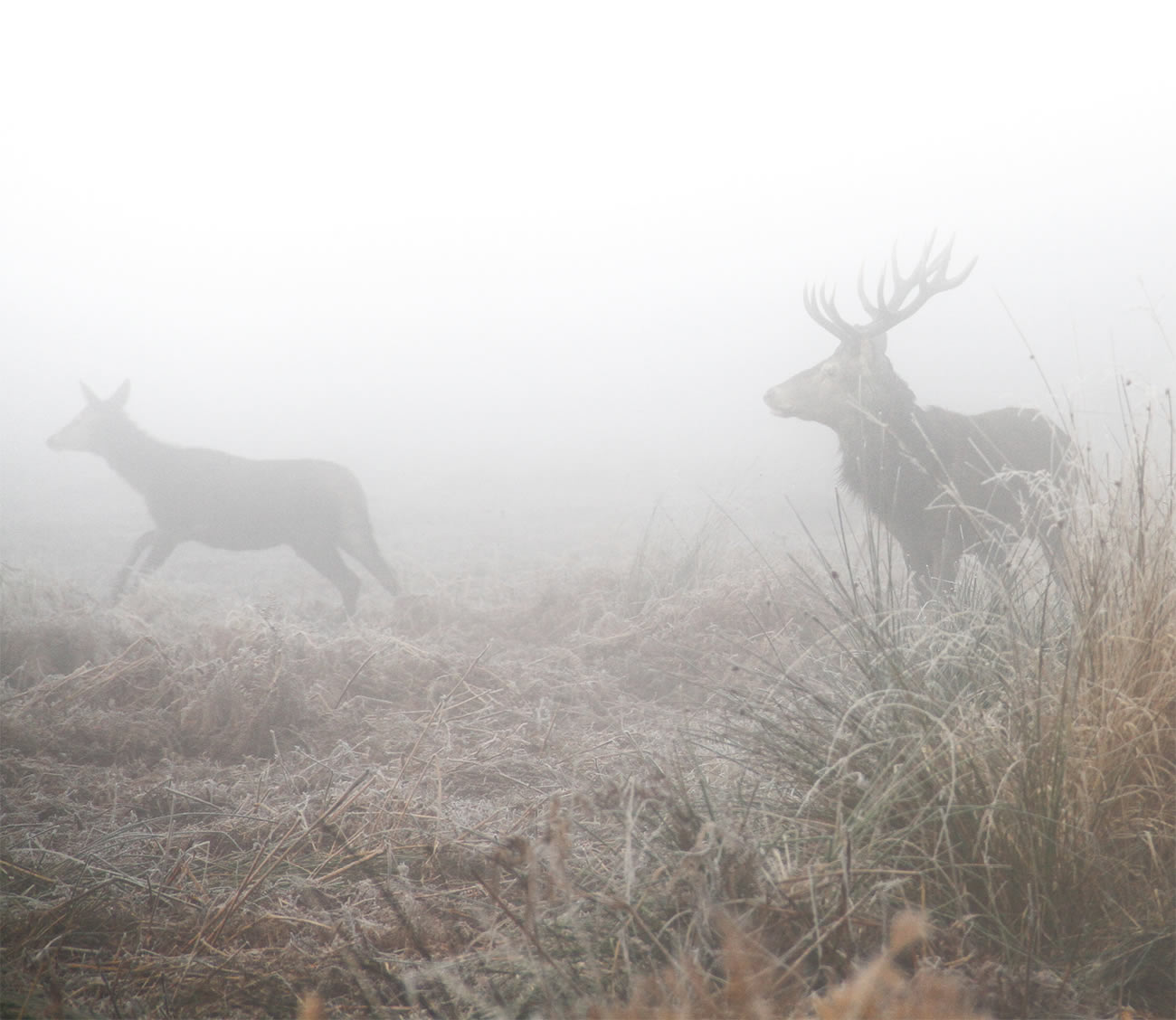 deers running photography by Sirli Raitma