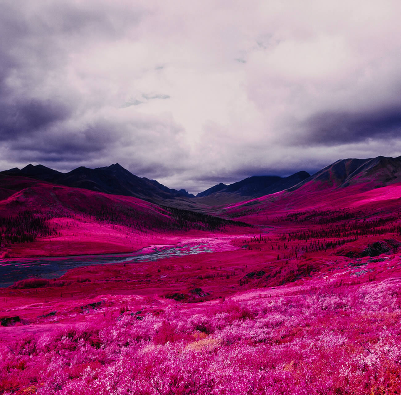 Striking Infrared Photography