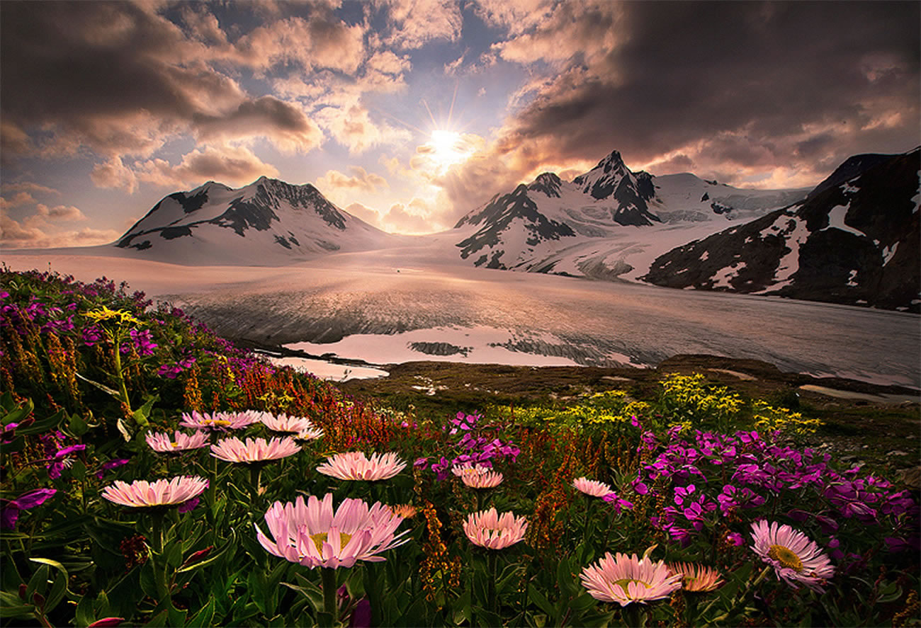 beautiful mountain and flowers by marc adamus