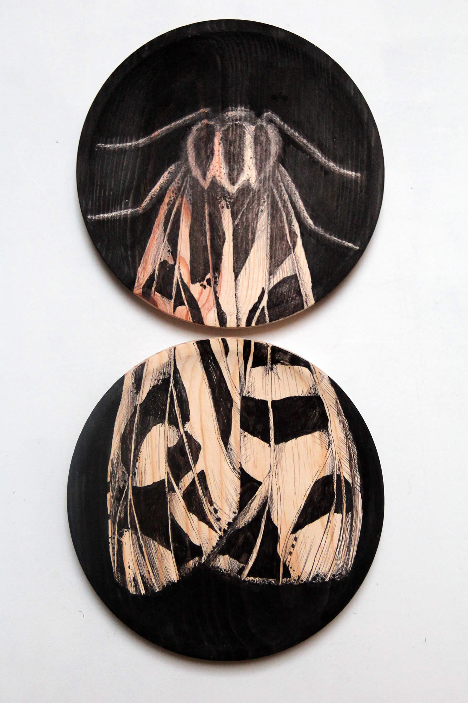 moth illustration on wood by raul gutierrez