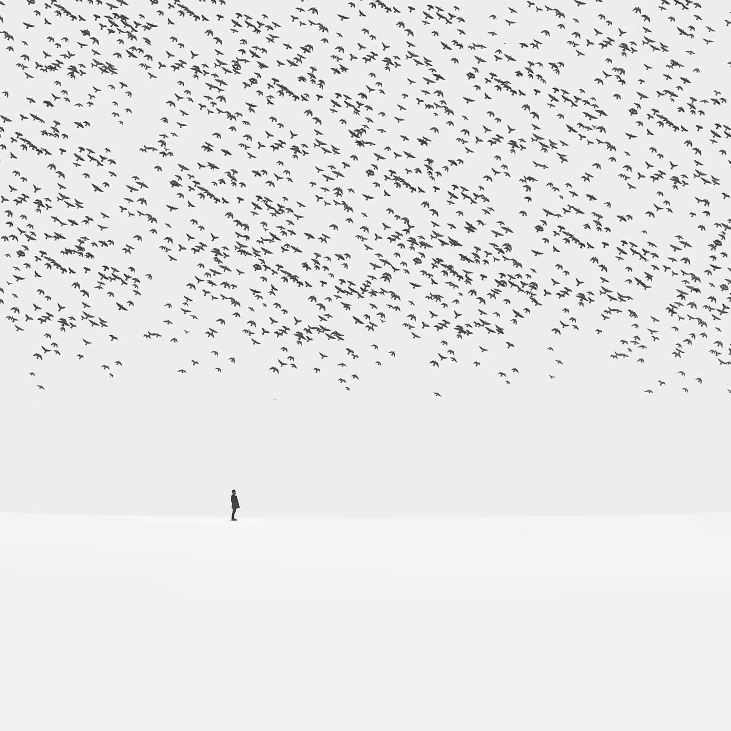 hossein zare surreal photography white flock black