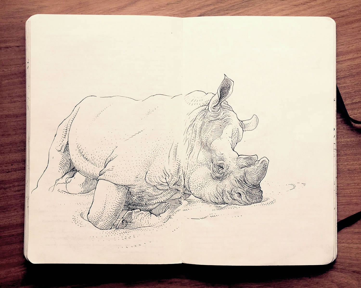 rino sketchbook drawing by Jared Muralt