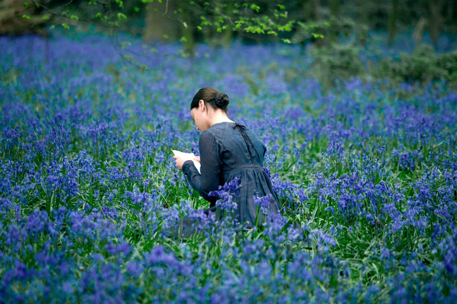 bright star bluebells wood