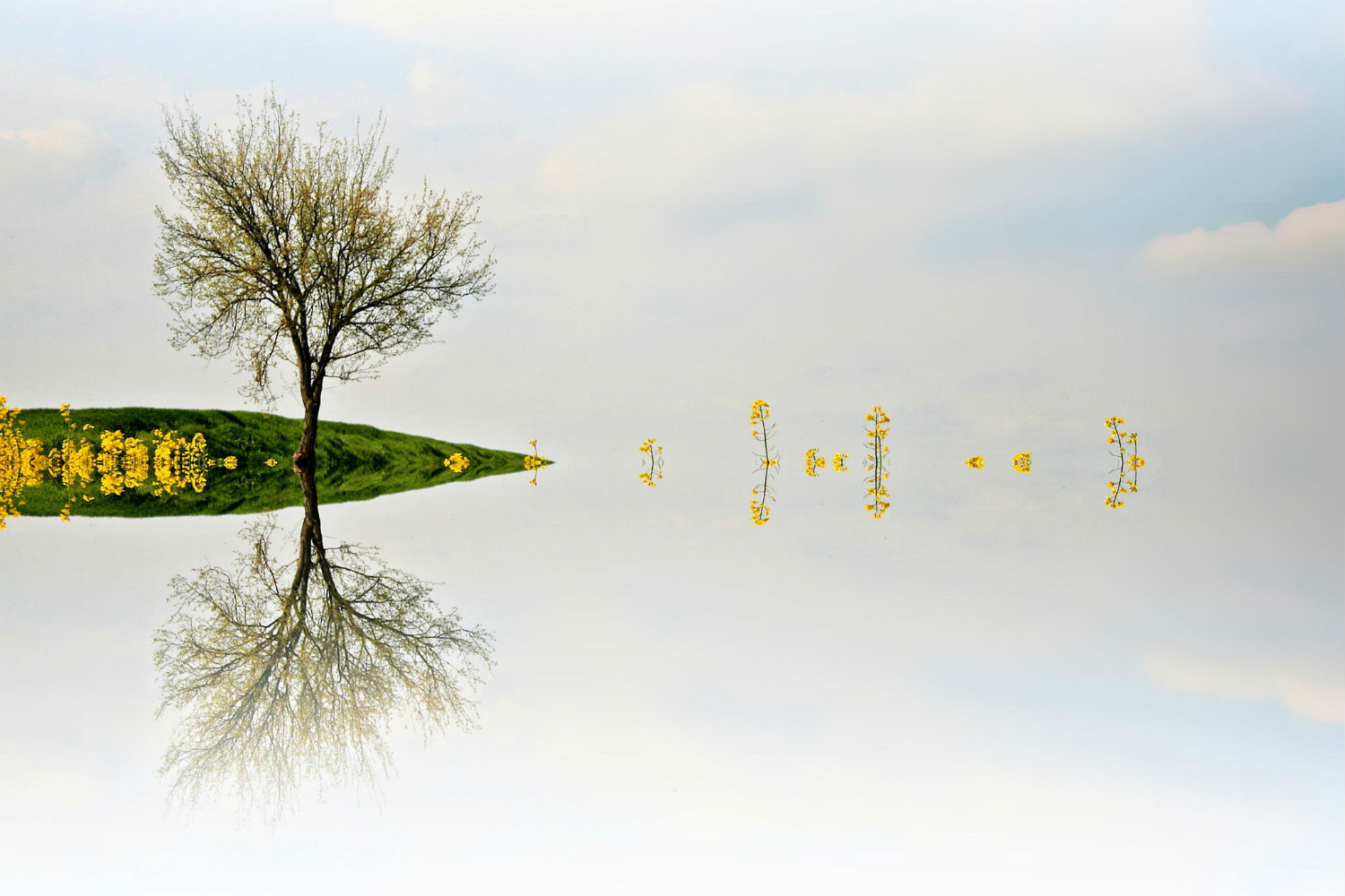 Adrienn Balaskó photography mirror trees