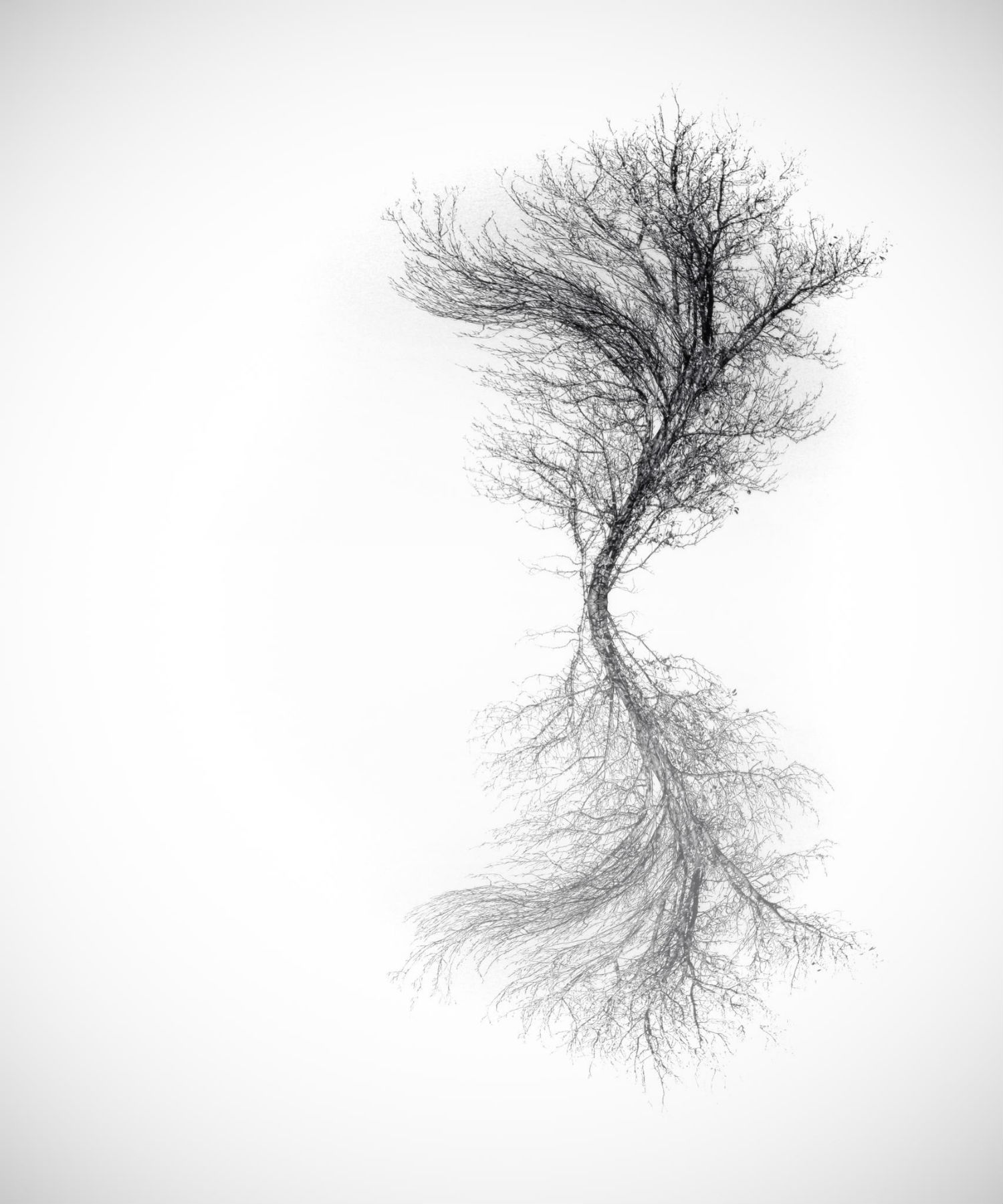 Adrienn Balaskó photography tree mirror image