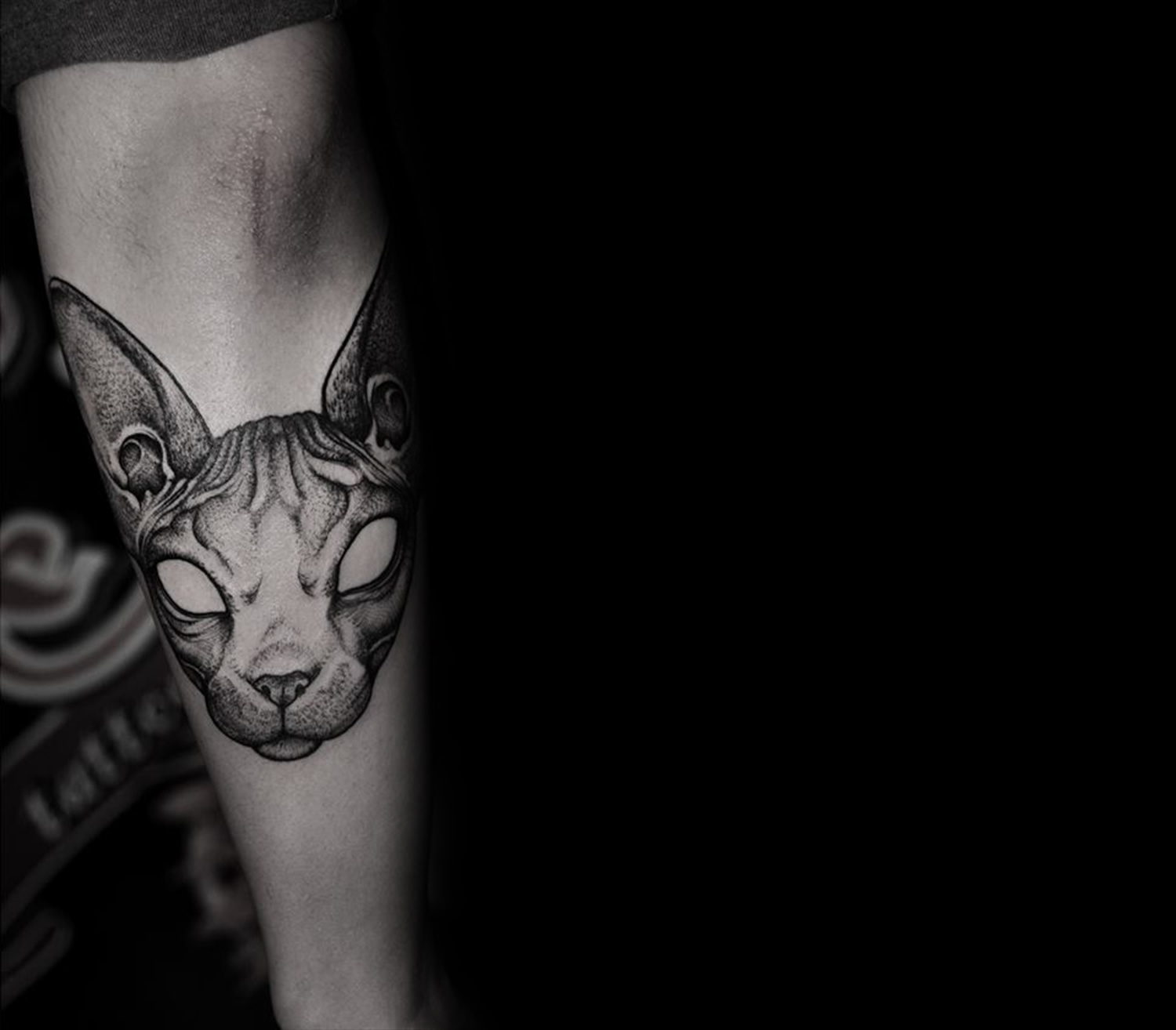 Sphynx cat by grindesign