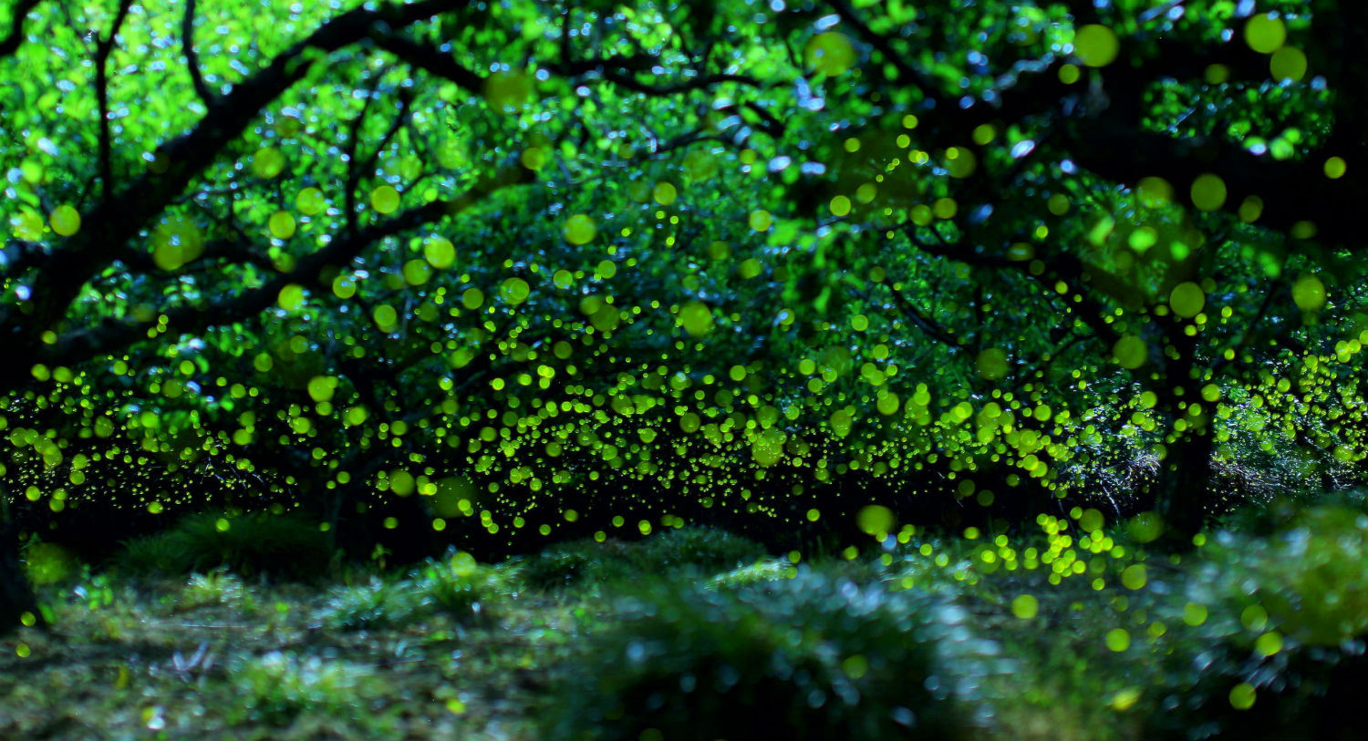 yume 500px light summer forest