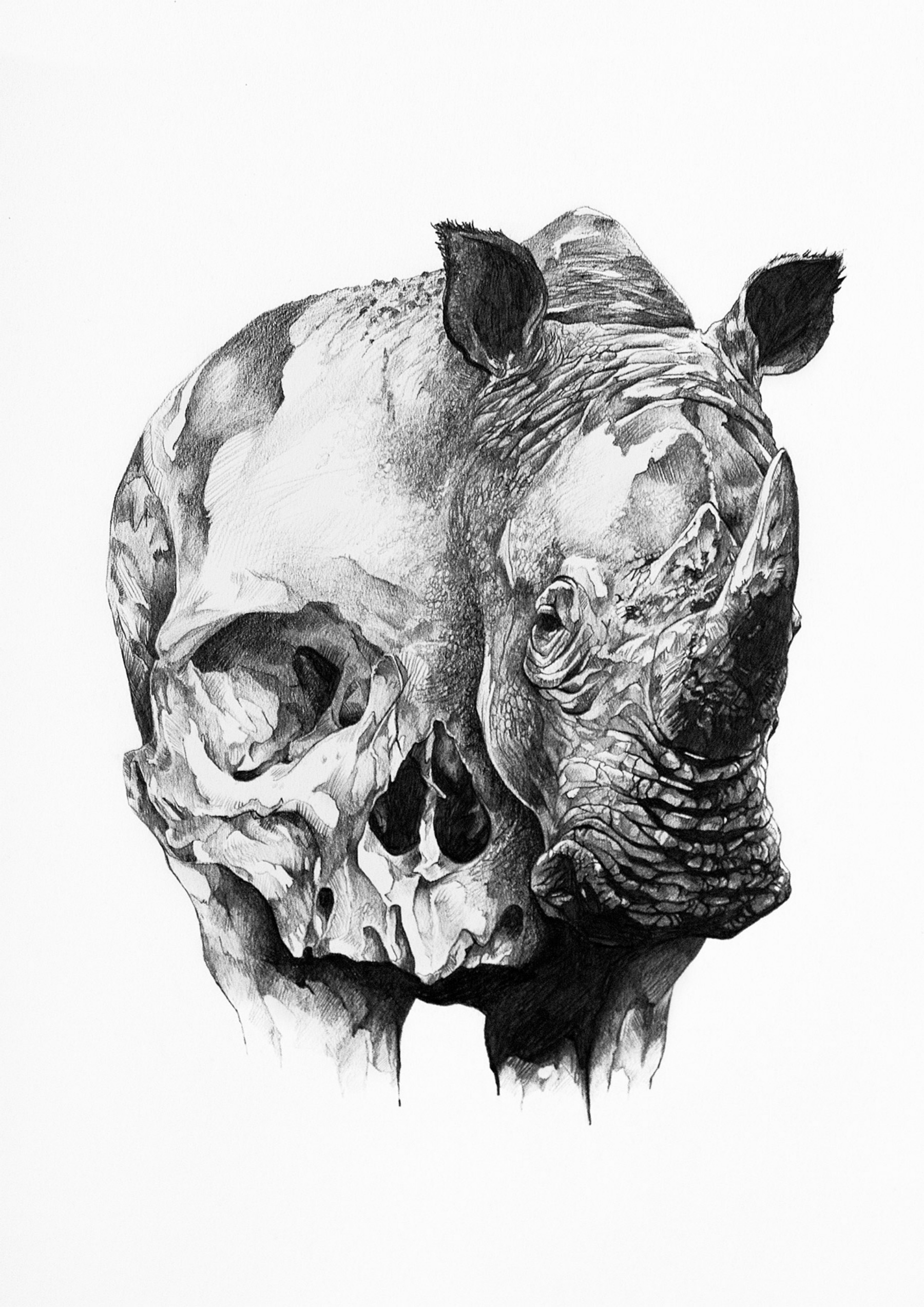 The Rhino and the Skull by Ivan Kamargio