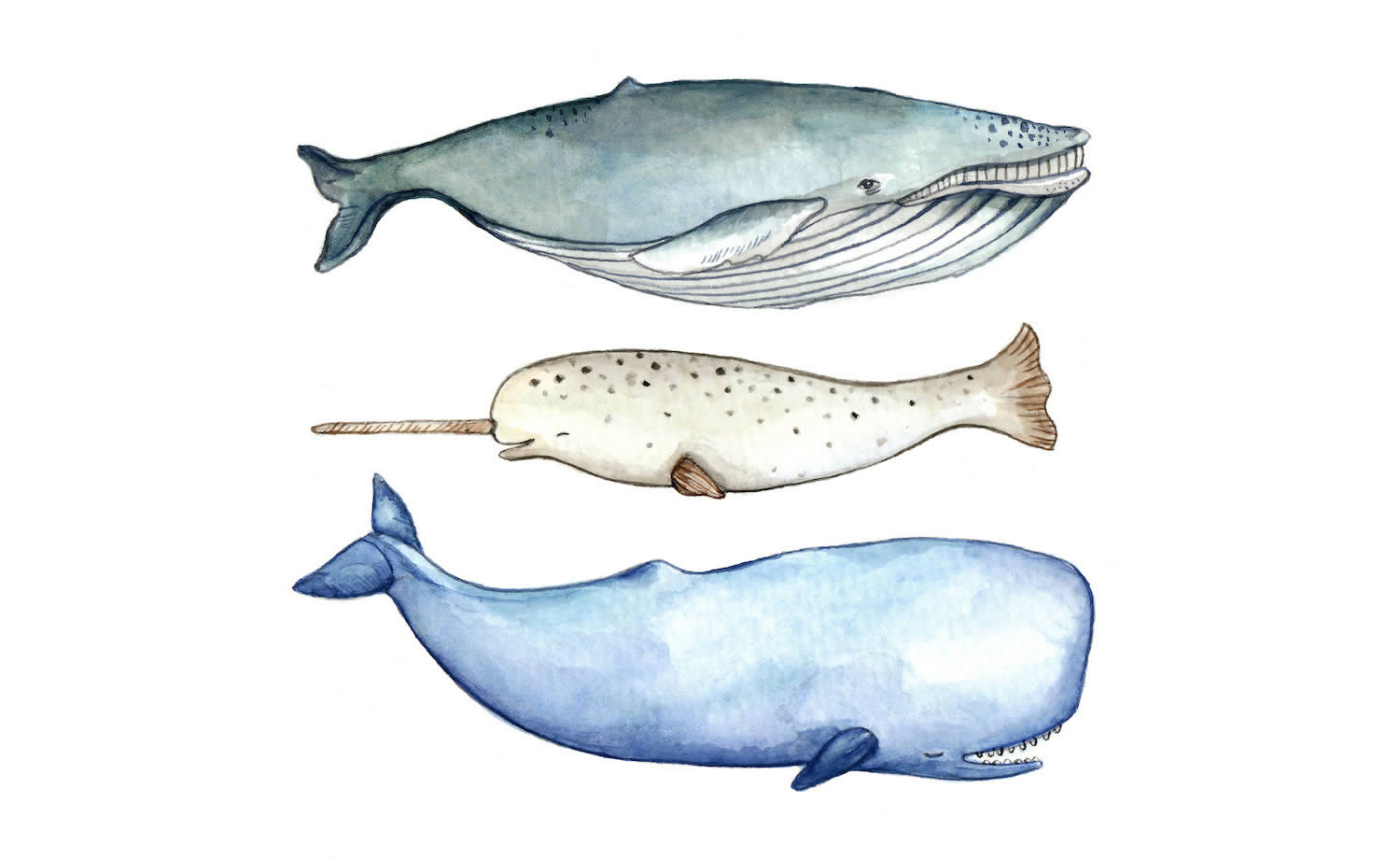 3 whales by brooke weeber
