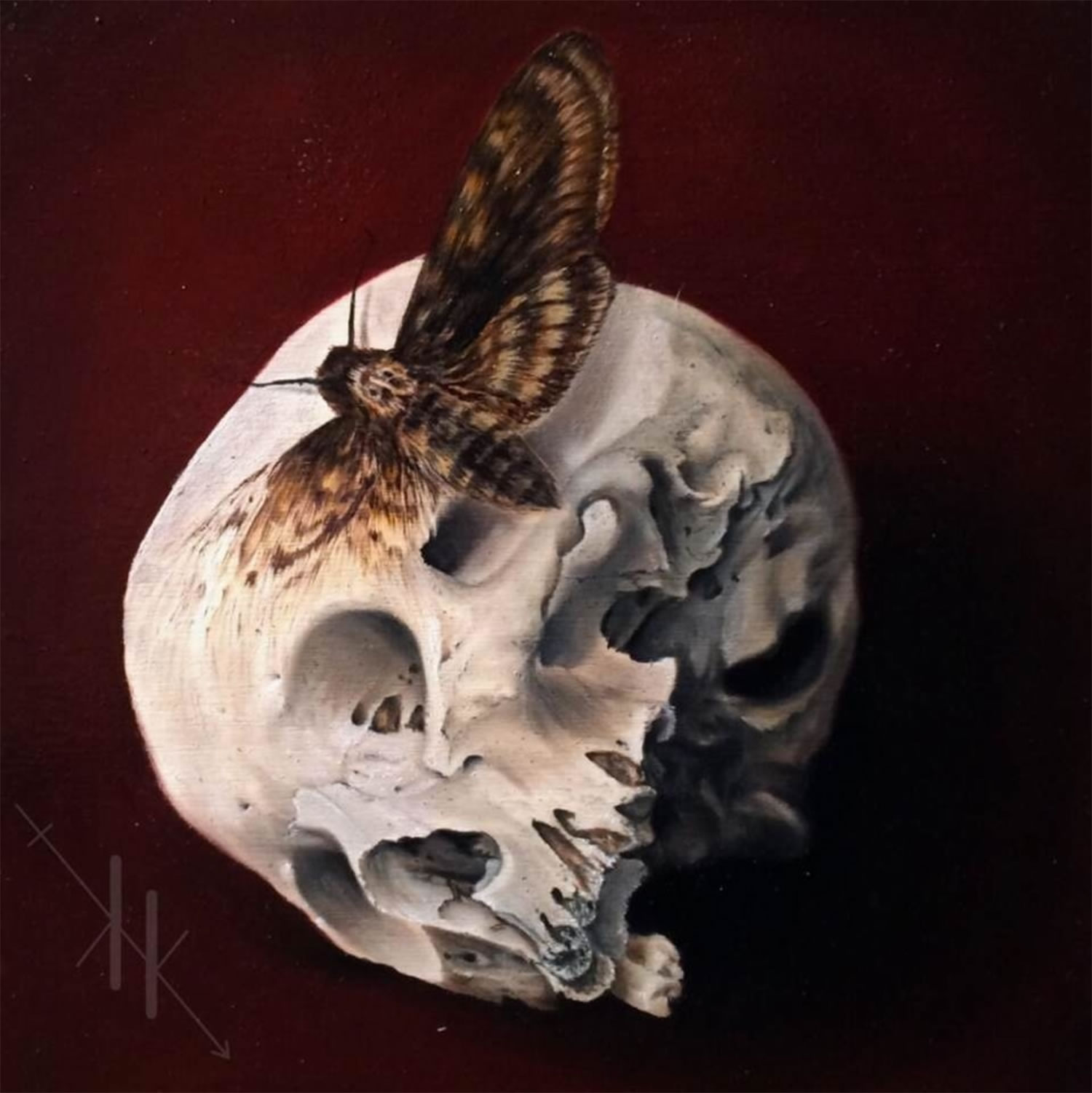 death's head hawk and skull by kit king
