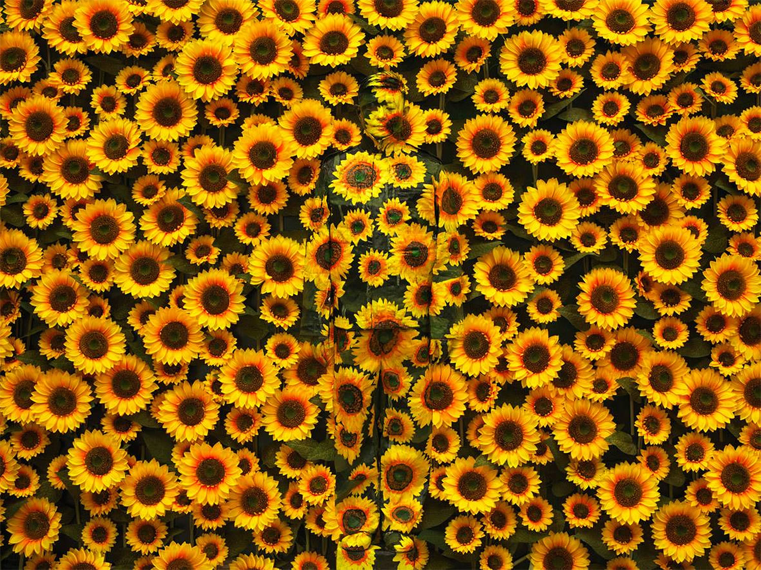 bolin blended into a background of sunflowers