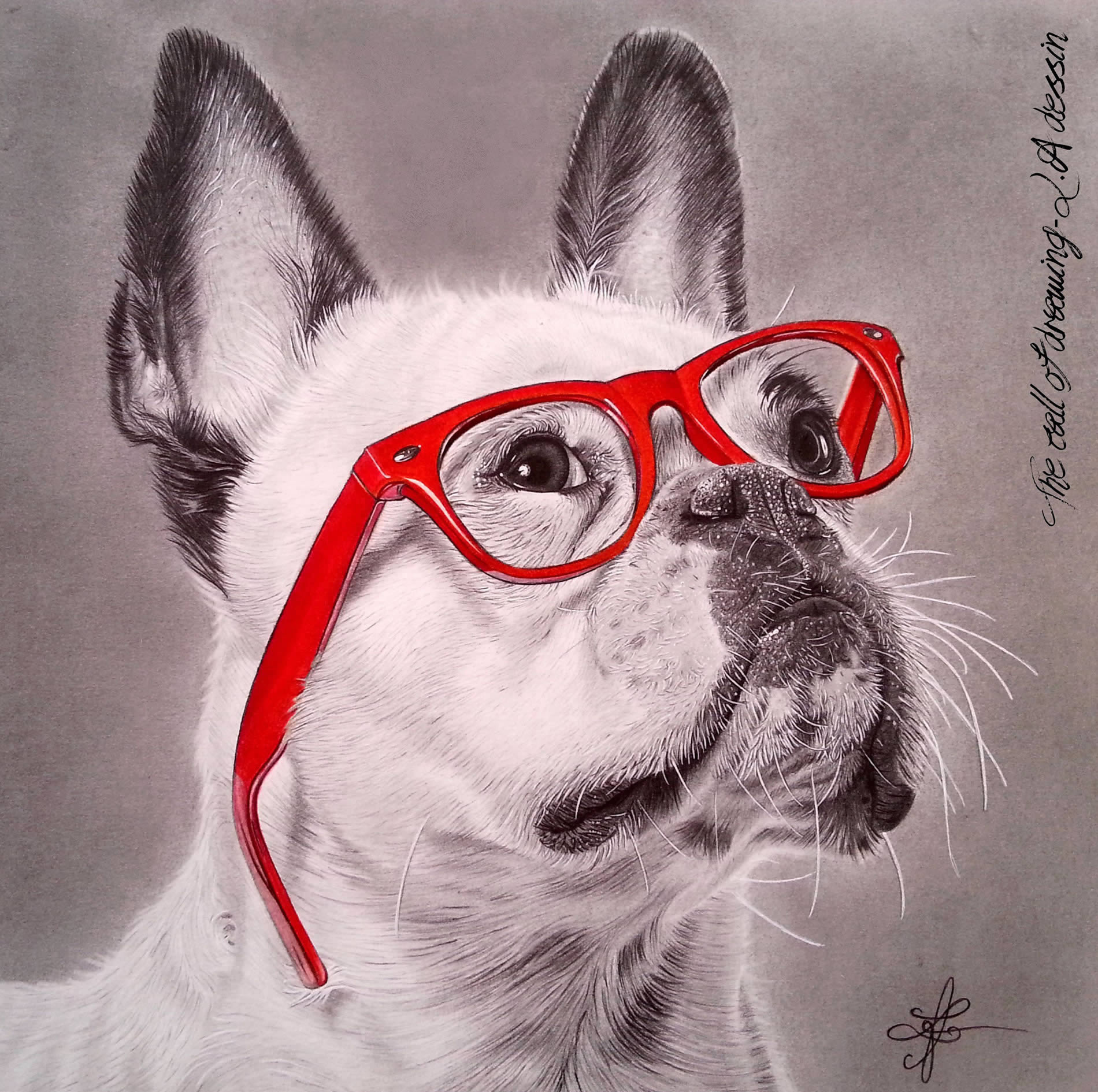 bulldog with red glasses, a drawing by lorine angelmann