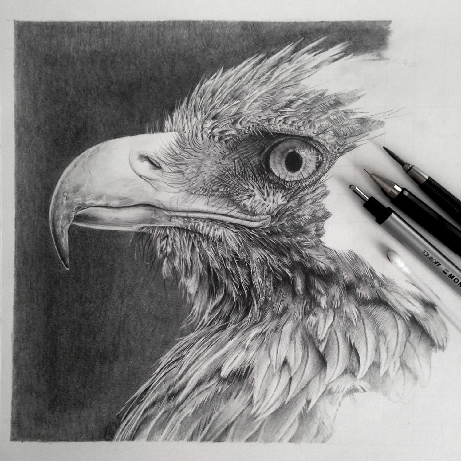 eagle drawing, hyperrealist by monica less