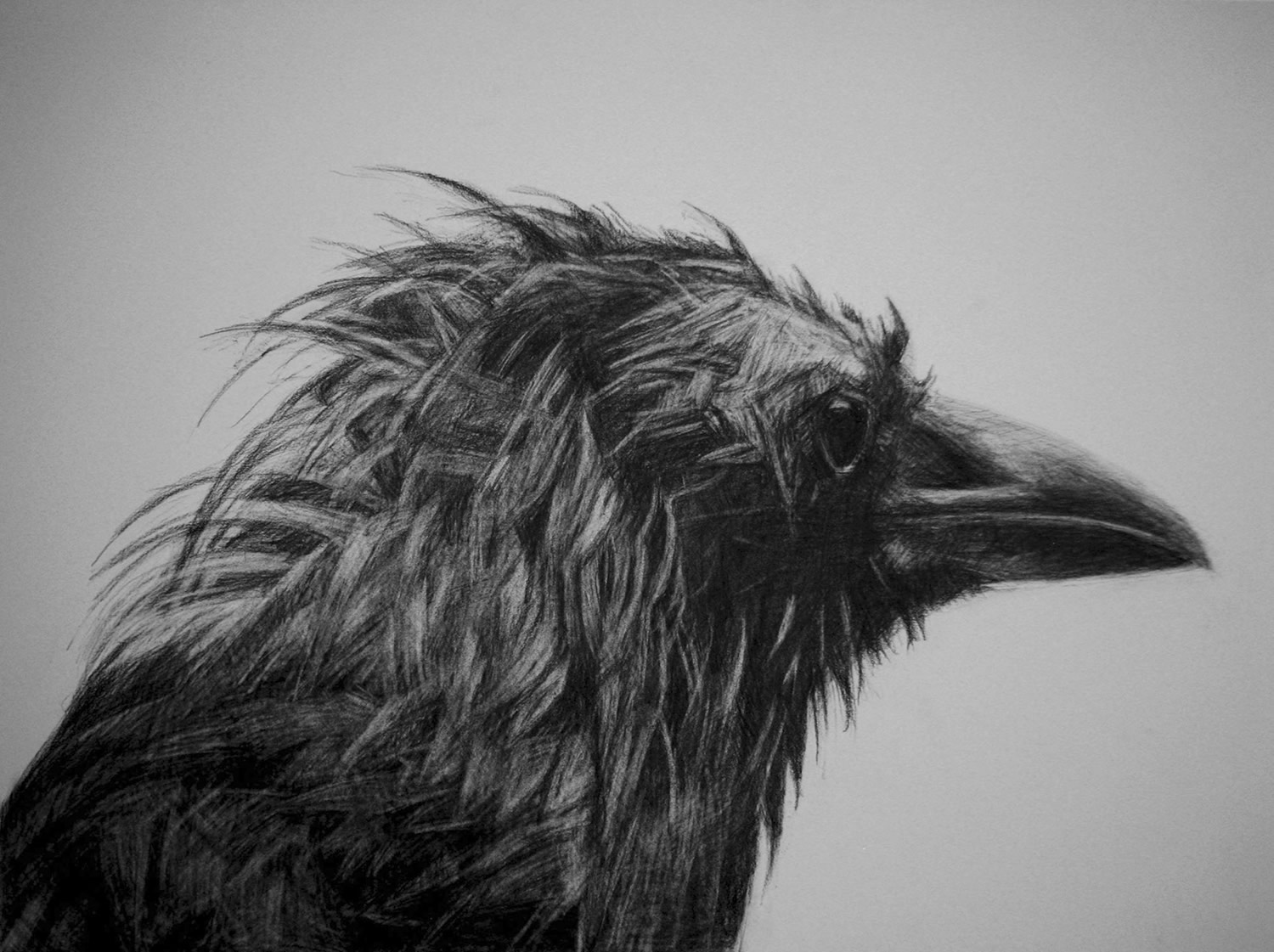 crow drawing by kelly blevins