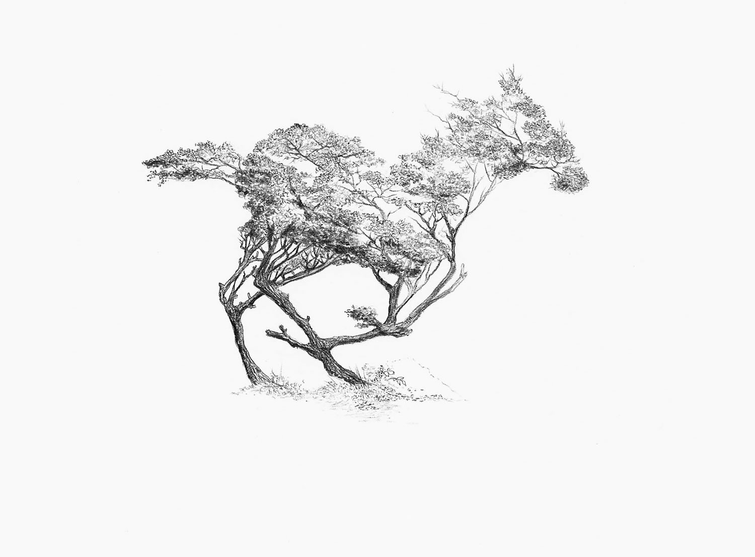 tree branches transform into a horse, optical illusion by Alejandro García Restrepo