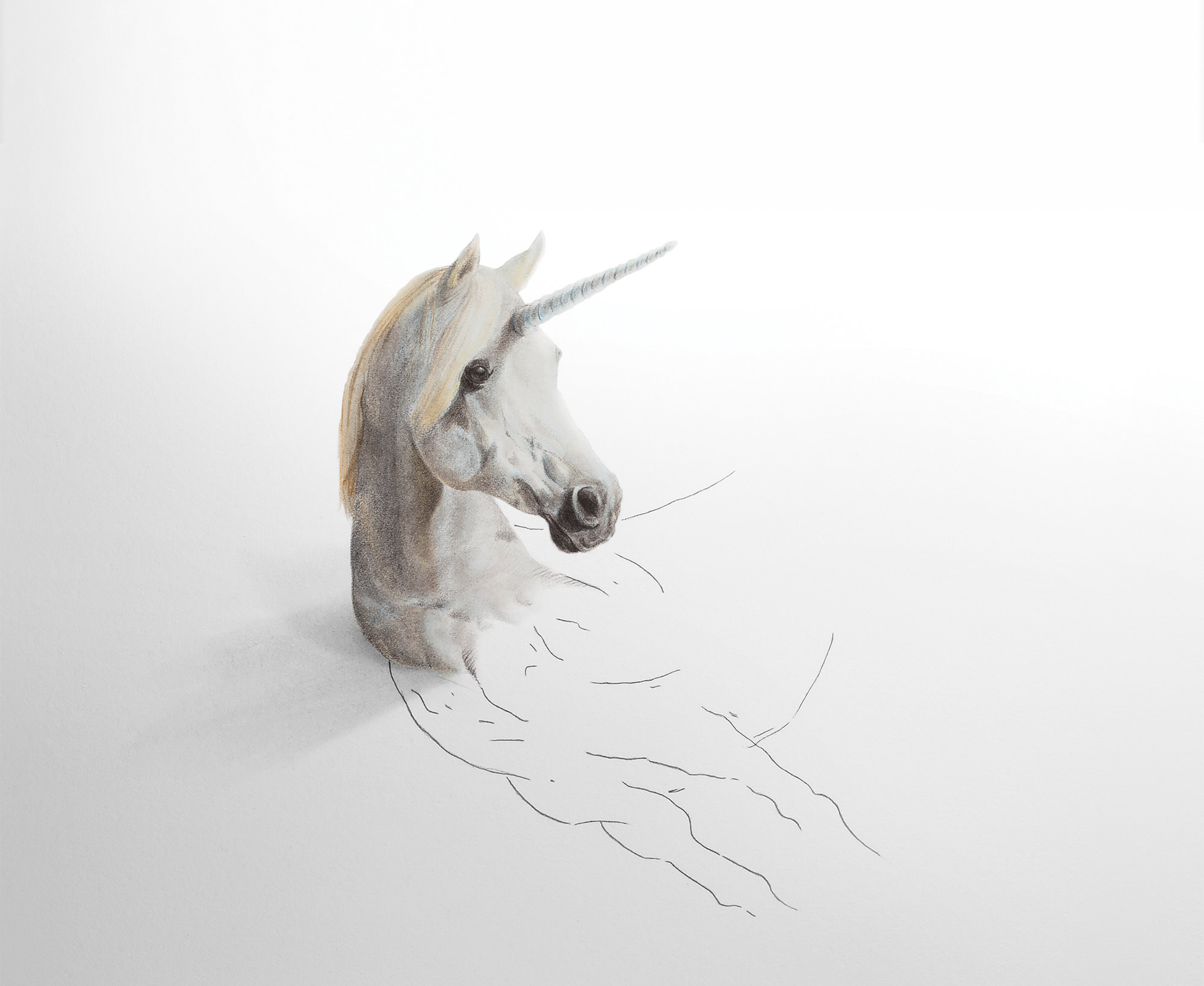 hernan martin illustration black white drawing unicorn