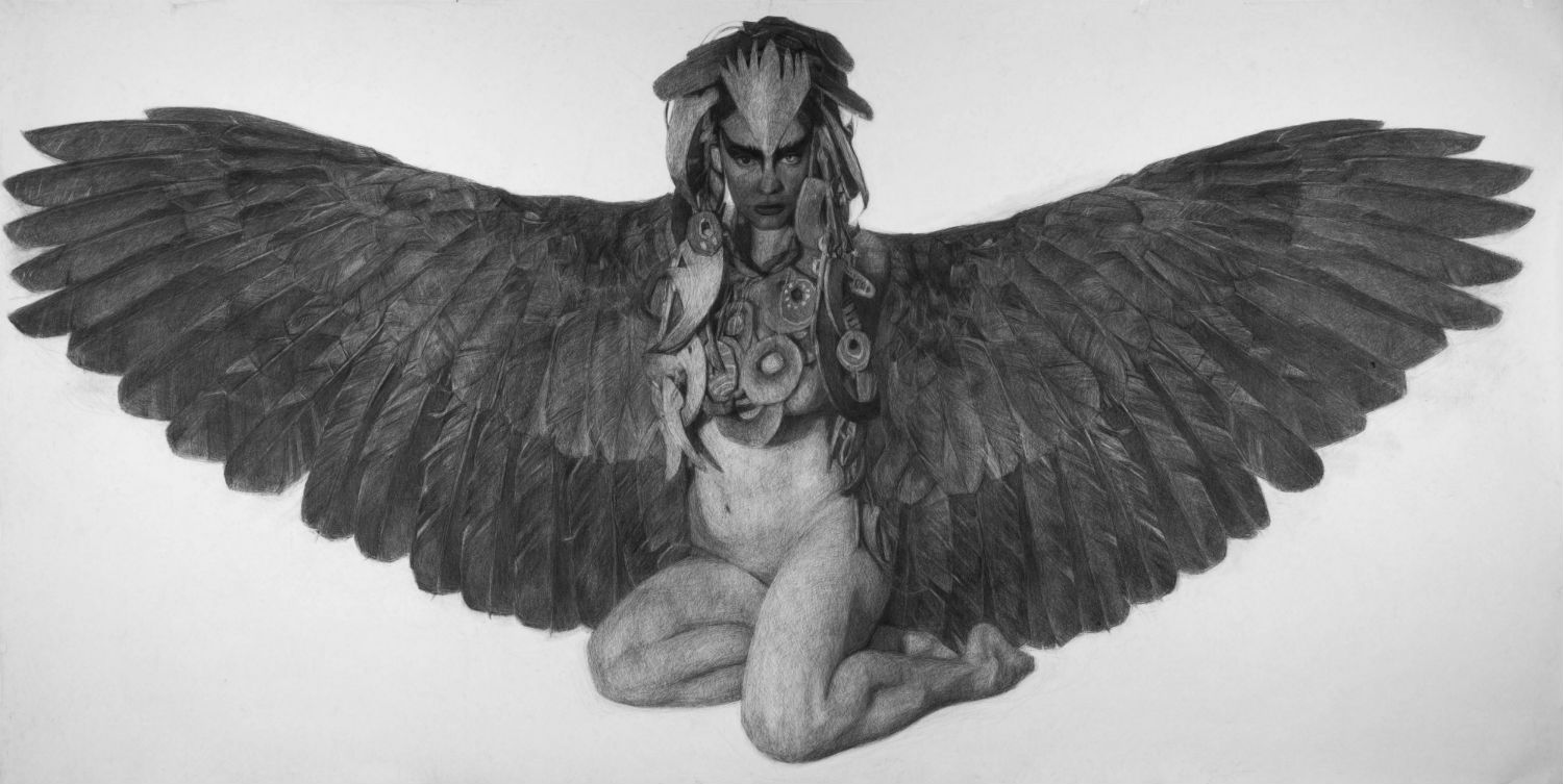 kelly blevin black white illustration pencil wings
