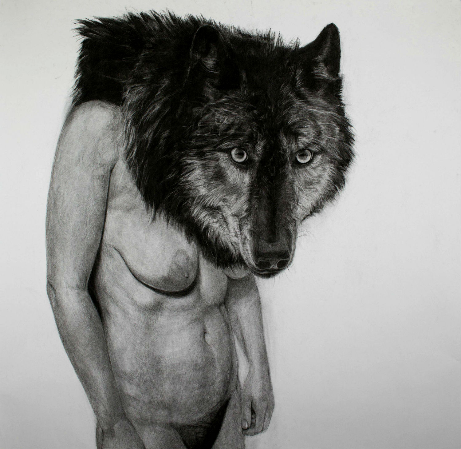 kelly blevin black white illustration wolf
