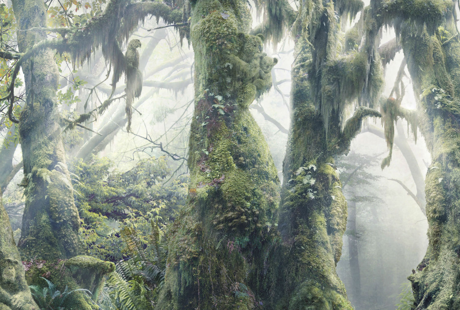 Anaïs Boileau WWF digital art rainforest illusion