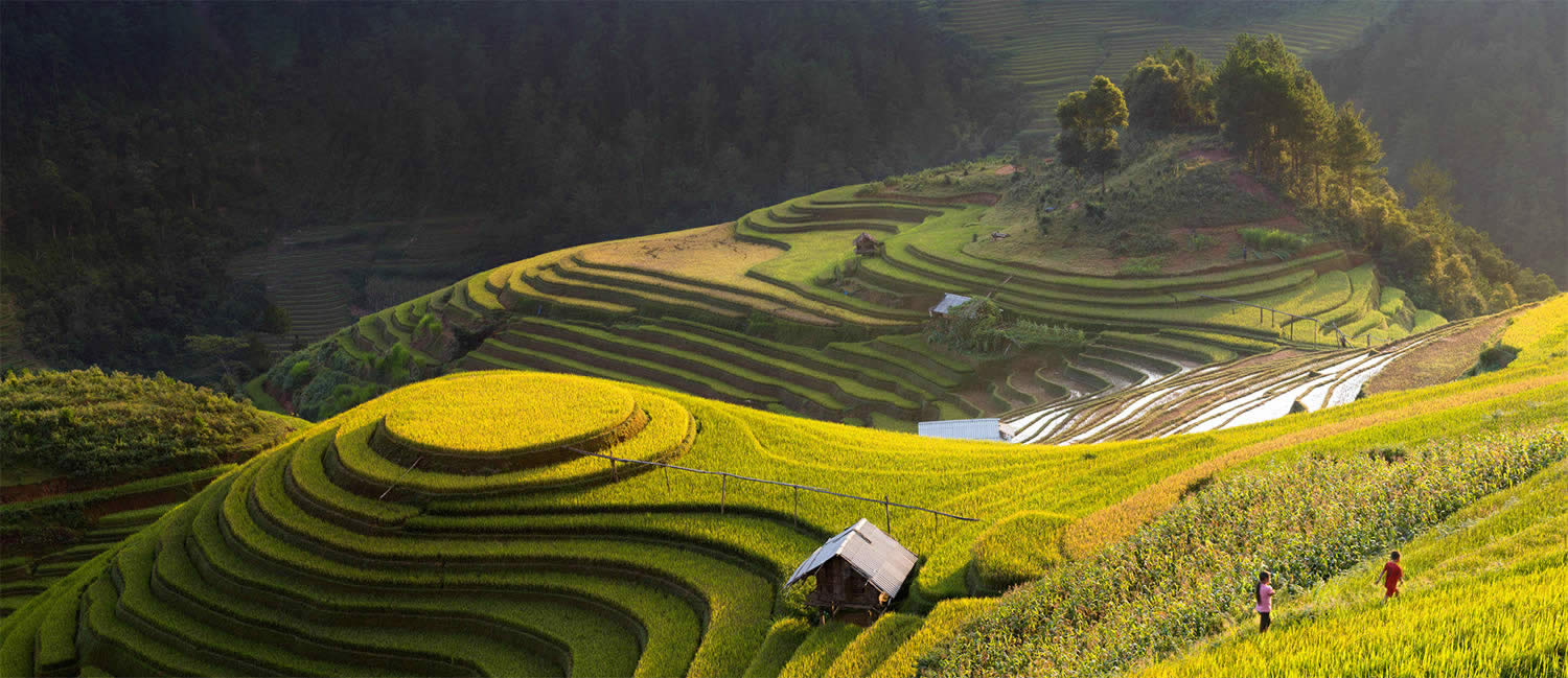 stunning view of rice terraces