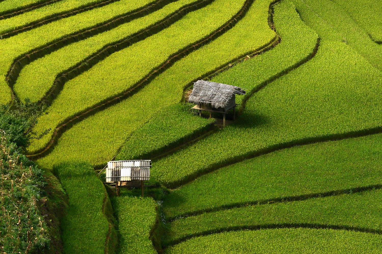 aerial view of rice terrace with two houses, vietnam. paddy fields