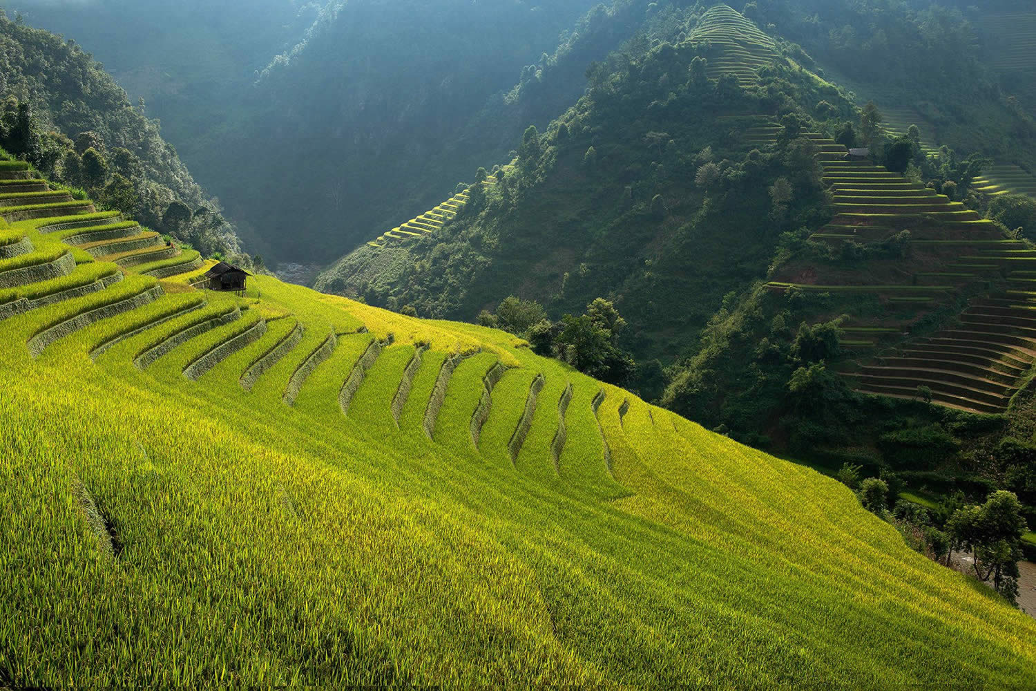 side view of bright green rice terrace