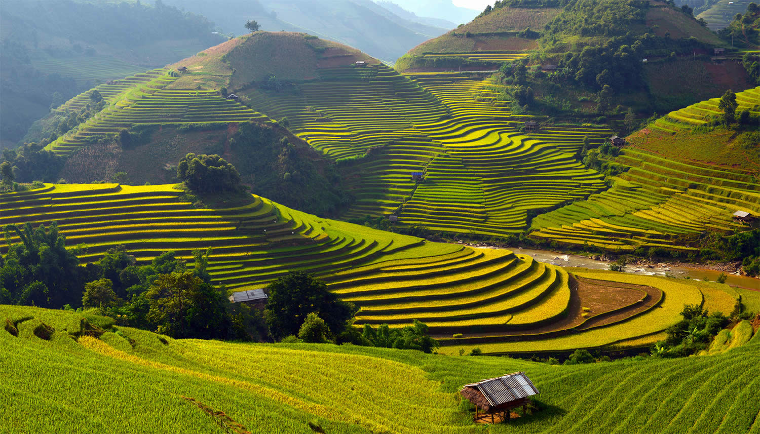 green rice terraces, paddy fields in vietnam