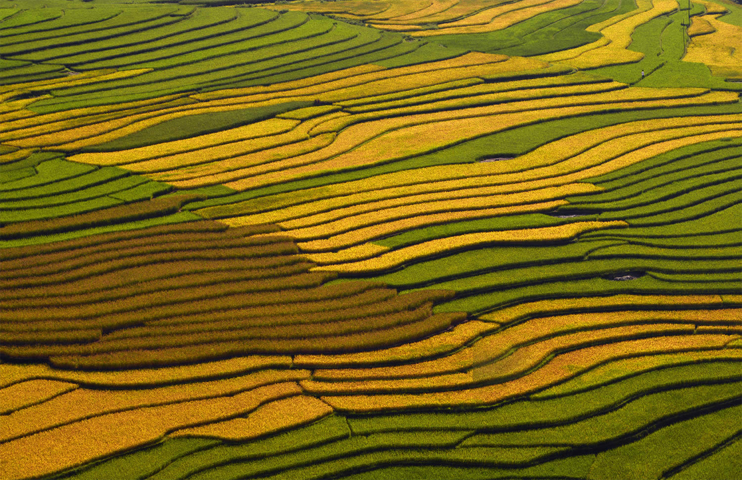 multicolored rice terraces in vietnam