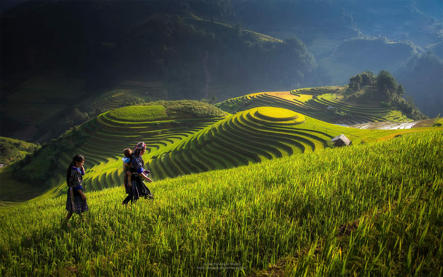 woman walking on the rice field hill