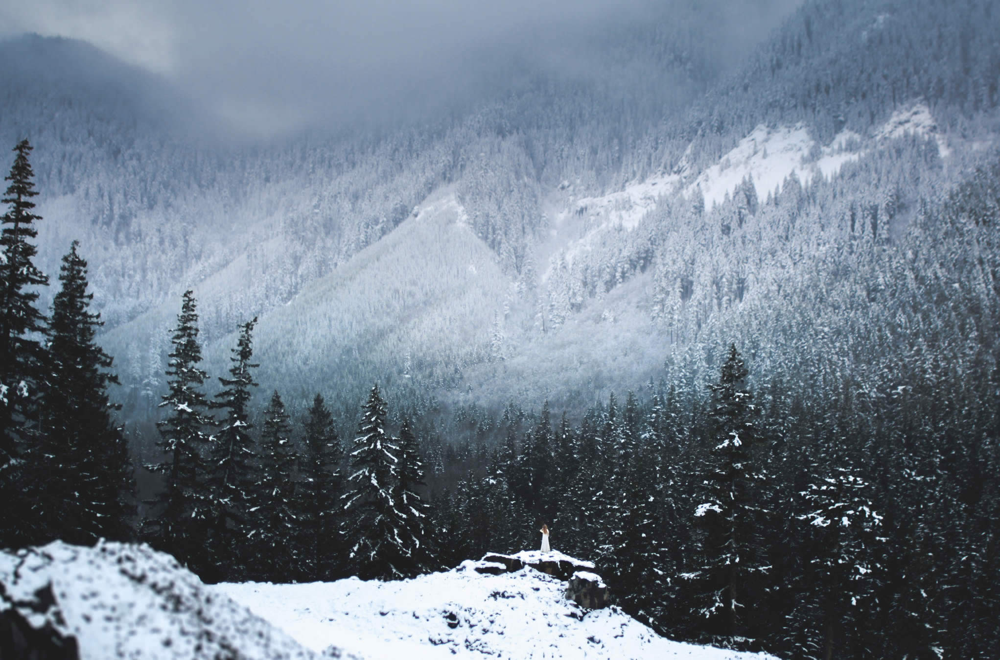 pine tree forest and mountains, photos by elizabeth gadd