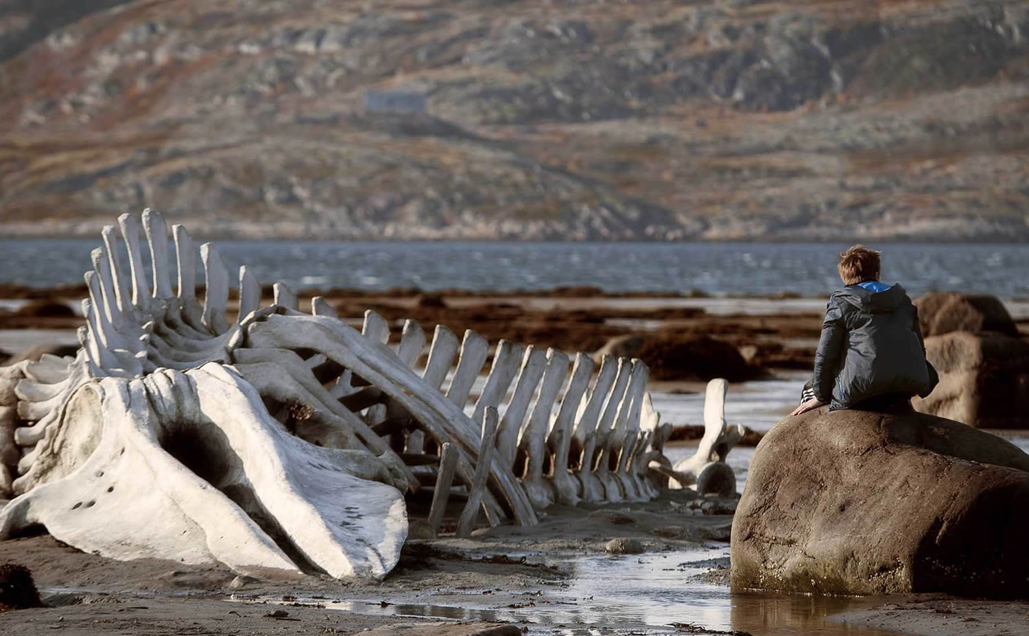 dinosaur bones on sea shore, person sitting on rock in Leviathan